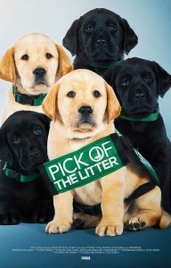 BBFF2018 at Byron Theatre - Pick of the Litter