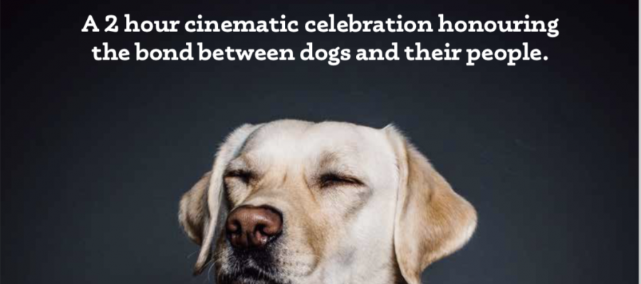Top Dog Film Festival 2018 at Byron Theatre